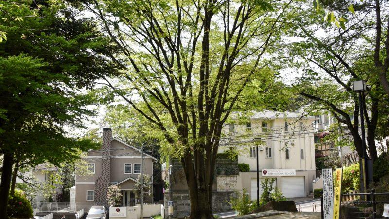 Aoba Japan International School Kindergarten To Grade 12 In Tokyo